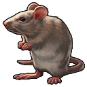 Ratten.png